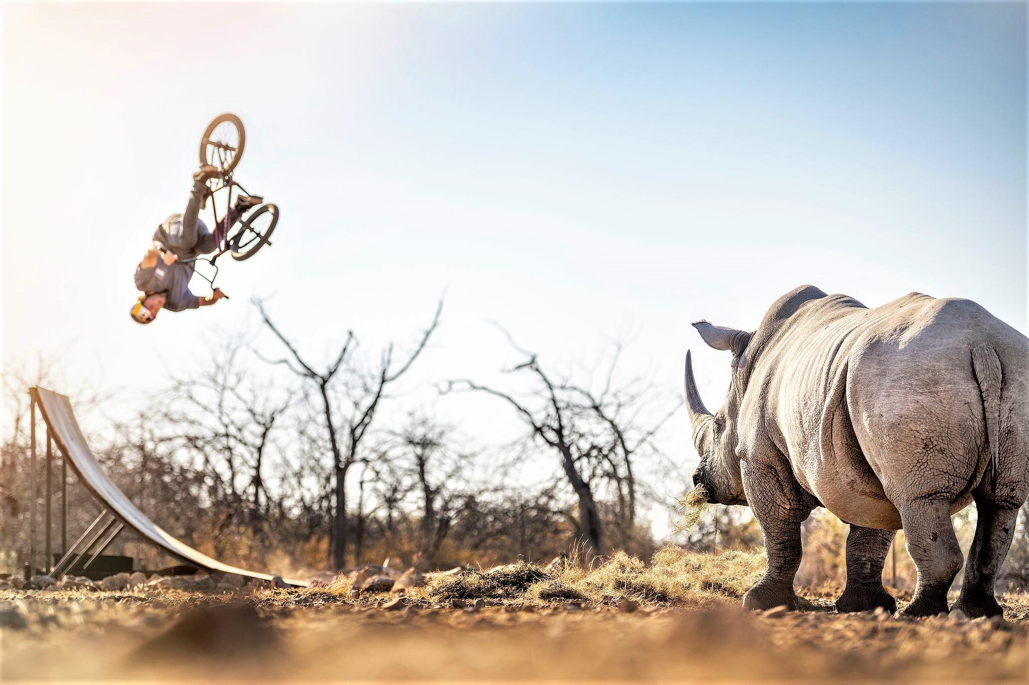 Flair for Rhinos!